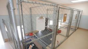 PHOTO IMAGES-Camino Seco Pet Clinic AZ (91 of 135) [800x600]